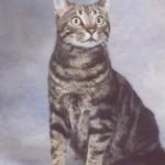 Turbo the Cat